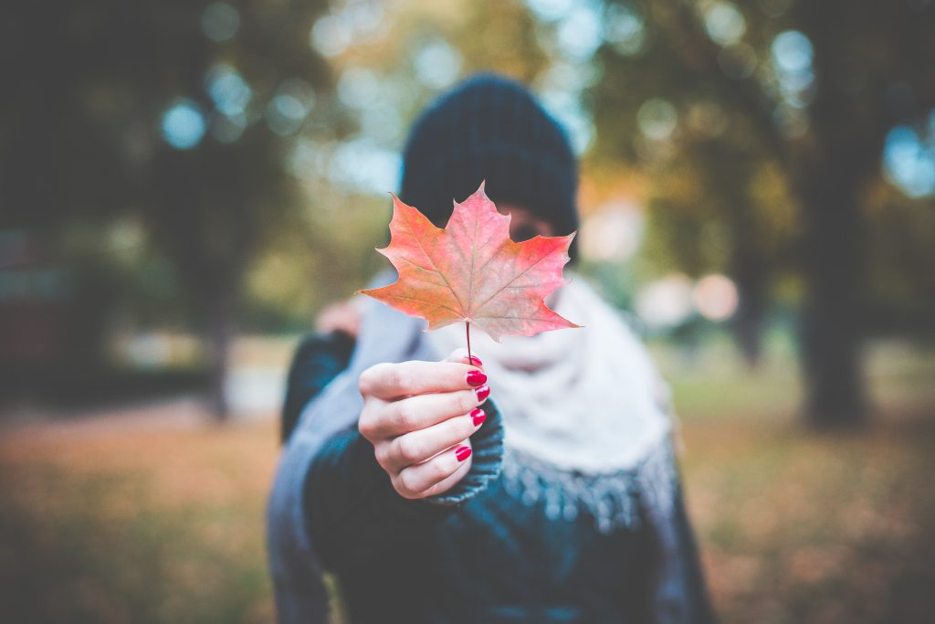 young-girl-holding-autumn-colored-maple-leaf-2-picjumbo-com